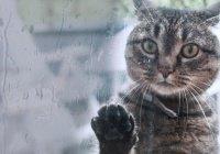 В Британии кошка вернулась домой через 13 лет