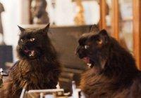 Зоопсихолог рассказал о состоянии кота Бегемота после похищения