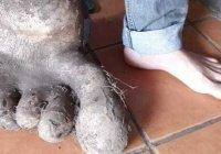 Гигантскую картофельную стопу вырастили в Бразилии