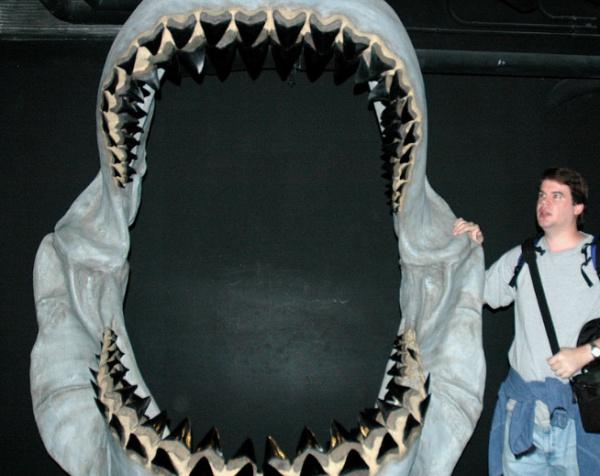 Хищница, обитавшая в океанах Земли 20–30 млн. лет назад, по размерам в 2 раза превосходит современную белую акулу