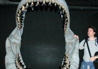 Найдены зубы гигантской хищницы, охотившейся на китов