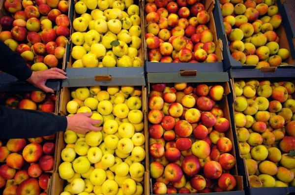 Употреблять плоды с потемневшей мякотью нельзя