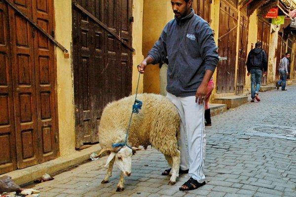 Курбан-байрам, Марокко