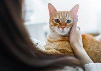 Пенсионерка из Подмосковья через суд пытается вернуть себе кота