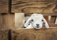БФ «Закят» принимает заявки на забой жертвенных животных
