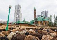Подведены итоги празднования Курбан-байрама в Татарстане
