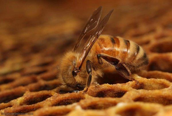 Тысячи насекомых появились из ниоткуда