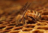 Тысячи пчел захватили центральную площадь Нью-Йорка (ВИДЕО)