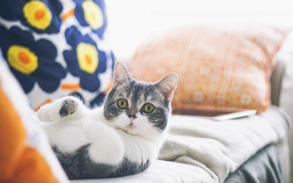 Если соответствующий план одобрят, всех кошек стерилизуют, зарегистрируют и снабдят чипами