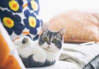 В Новой Зеландии запретят кошек