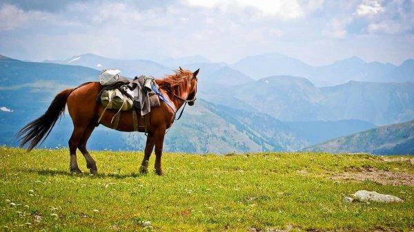 Подобной туристической породы лошадей нигде в мире нет