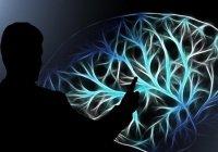 """""""Второй мозг"""", или как питание влияет на принятие решений"""