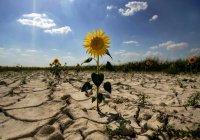 Предсказан климатический апокалипсис в России