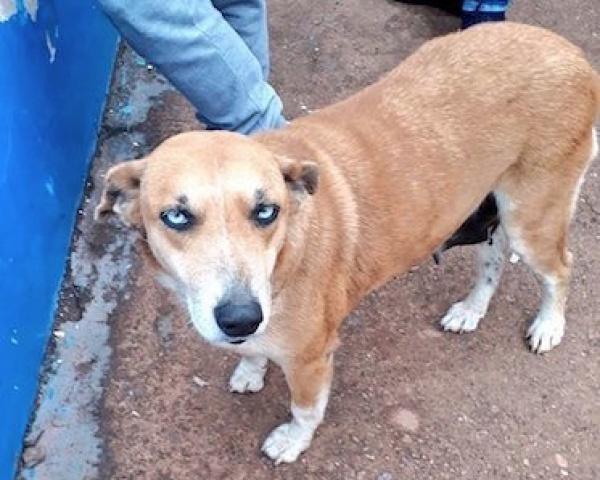 Собаке 10 лет, и из-за темнеющих ночью глаз на языке гуарани ее назвали Тесапара