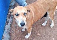 Собака стала тренером футбольной команды в Парагвае (ФОТО)