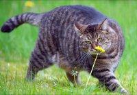 В Италии толстый кот отправил мужчину в больницу