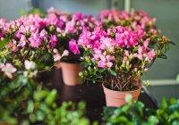 Стало известно, как растения влияют на память
