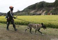 Количество жертв землетрясения на Хоккайдо возросло до 44 человек