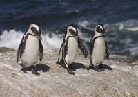 Мумии пингвинов обнаружили в Антарктиде