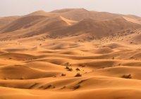 Ученые: Сахара может спасти мир от голода