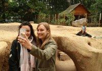 В зоопарке Нидерландов динозавры защитят от селфи