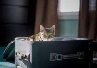 Раскрыт секрет идеально упакованного чемодана