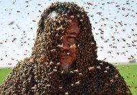 Пчела не дала жителю Саудовской Аравии поставить мировой рекорд (Фото)