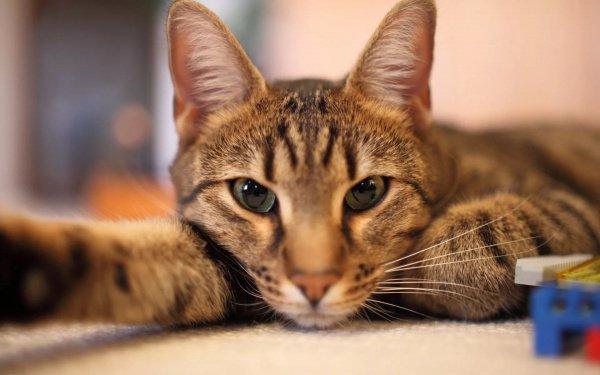 В числе опрашиваемых нашлись и такие, кто готов расстаться с любимым котом, только бы стать обладателем новенького iPhone