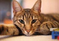 Жители Санкт-Петербурга готовы обменять кошек на iPhone