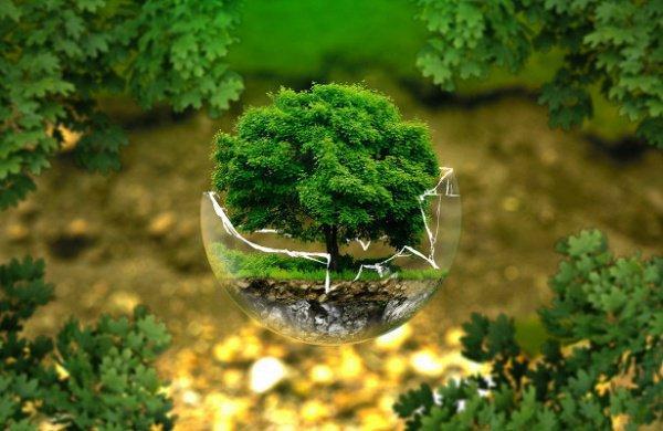 Со слов авторов, подобная мера нужна, чтобы сохранить биоразнообразие на Земле