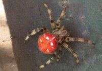 В Уфе сообщили о ядовитых пауках на городских улицах
