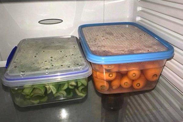 В подобных условиях овощи, по словам австралийки, остаются свежими на протяжении нескольких недель