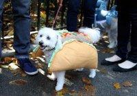 Первый костюмированный парад собак прошел в Москве