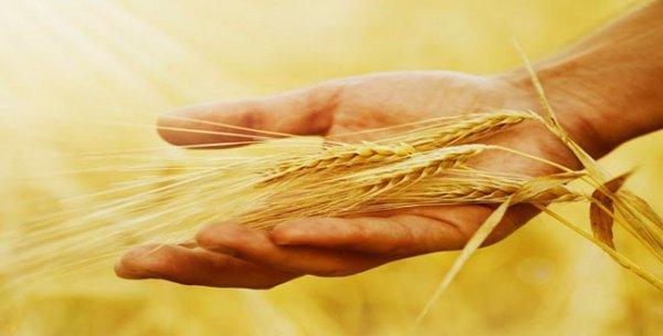 Почтительное отношение к хлебу в исламе