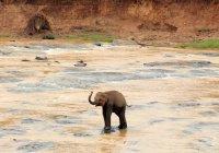 На Шри-Ланке 300 слонов почтили память погибшего вожака (ВИДЕО)