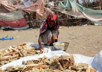 ООН: жители Йемена вынуждены есть листья
