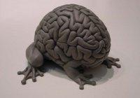 Желудок человека напрямую связан с мозгом