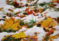 Россиян предупредили о сентябрьском снегопаде