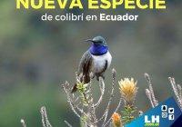 Биологи обнаружили новый вид колибри