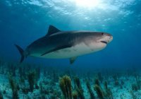 Акула ради еды выбросилась на берег в Мозамбике (ВИДЕО)