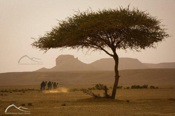 Удивительные пейзажи и природа Саудовской Аравии глазами одного фотографа (ФОТО)