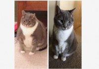 Толстый кот похудел и прославился (ФОТО)
