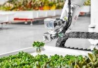 Ферму, где работают только роботы, открыли в США (ФОТО)