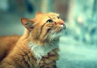 Кошка спасла ребенка при пожаре в Сыктывкаре