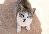 Пункты кормления бездомных кошек появятся на Кипре