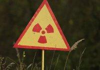 Ученые будут «убивать» радиацию бактериями