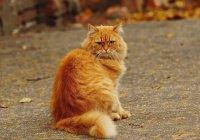 Фильм о рыжем коте, снятый в Волгограде, увидит весь мир