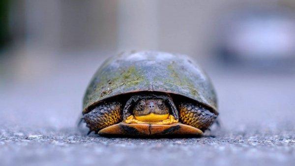 На территории мусороперегрузочной станции в поселке Елшанка была обнаружена черепаха