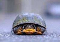 На мусорной станции в Саратове спасли черепаху