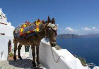 Полным туристам запретили кататься на осликах в Греции